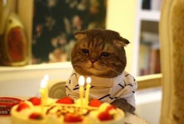 Tiup Lilin Sampai Makan Kue Tar Begini Meriahnya Pesta