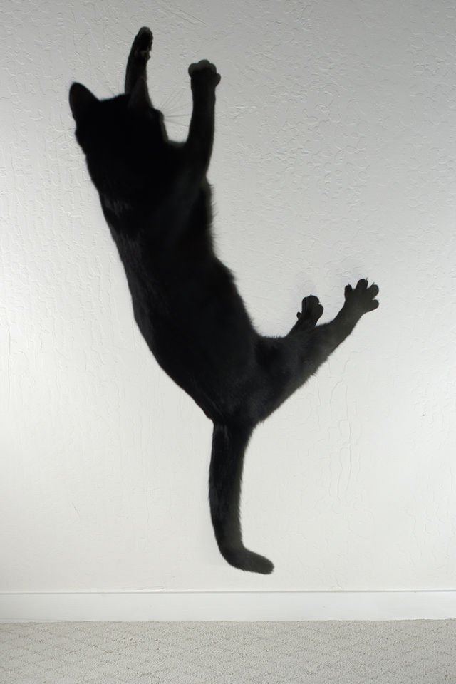 Jenazah Akan Hidup Kembali Jika Dilompati Kucing Hitam