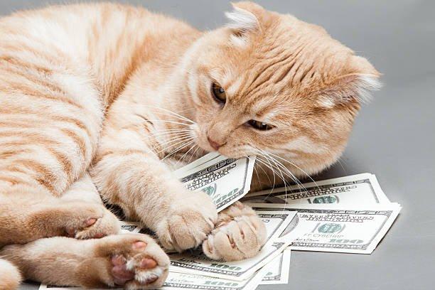 Kucing Pembawa Rezeki