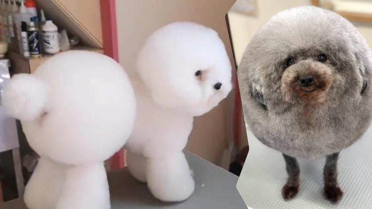 21++ Gambar boneka anjing yang lucu terupdate