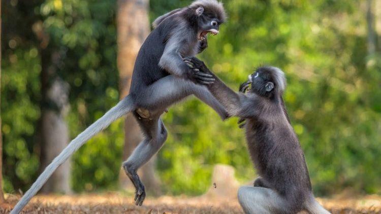 Download 66 Koleksi Gambar Lucu Binatang Galau Paling Lucu