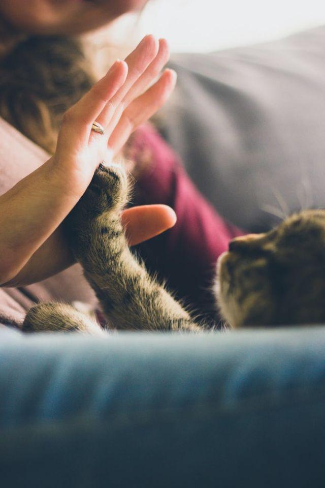 Kucing yang sedang bermain