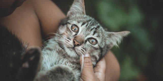 Tubuh kucing lebih bersih dari manusia