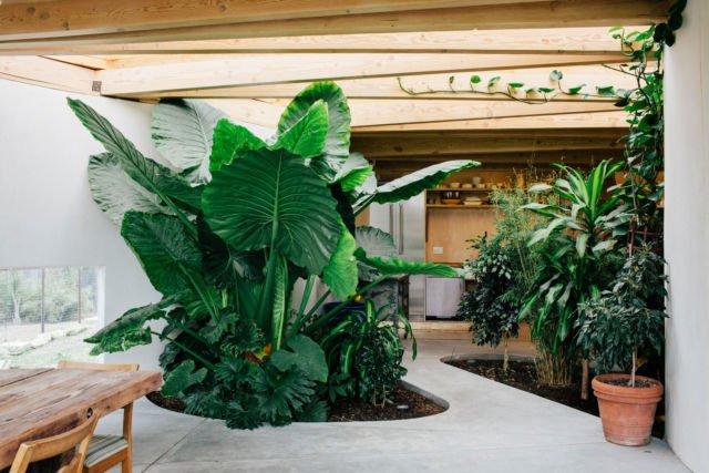 Inspirasi Taman Di Dalam Rumah Yang Luasnya Kurang Dari 100