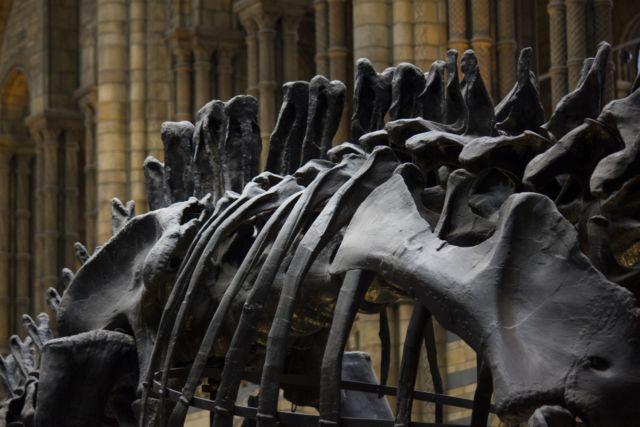 kerangka dinosaurus