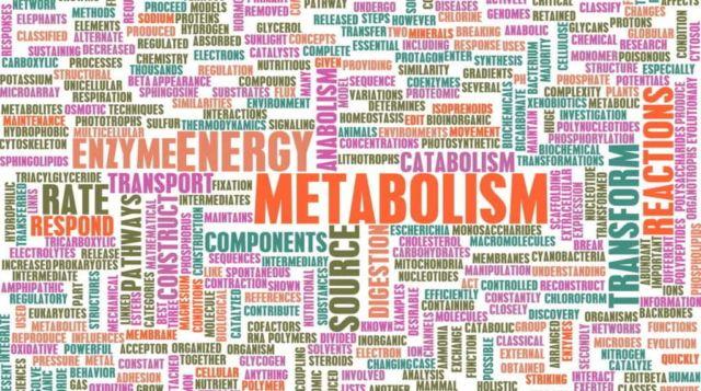 Meningkatkan Metabolisme