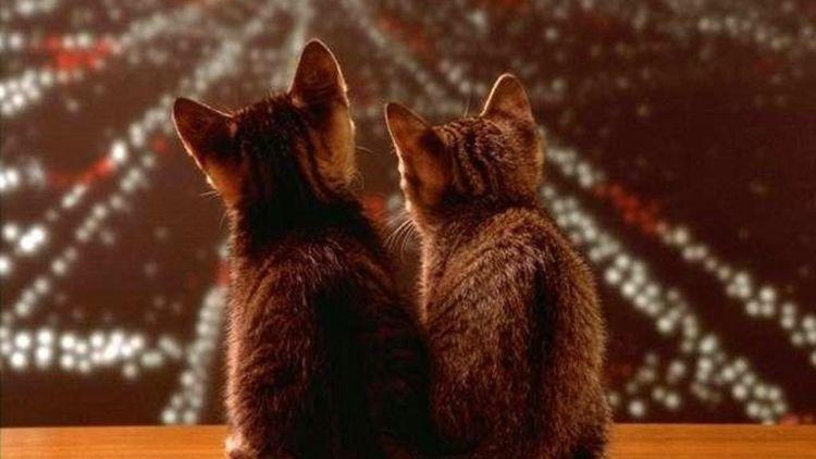 Download 96+  Gambar Kucing Hamil Lucu Terbaik HD