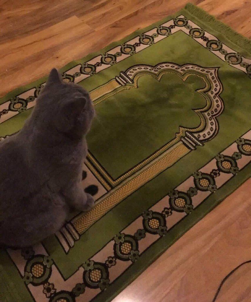 Ikut Sahur Dan Buka Puasa Kucing Lucu Ini Mungkin Yang