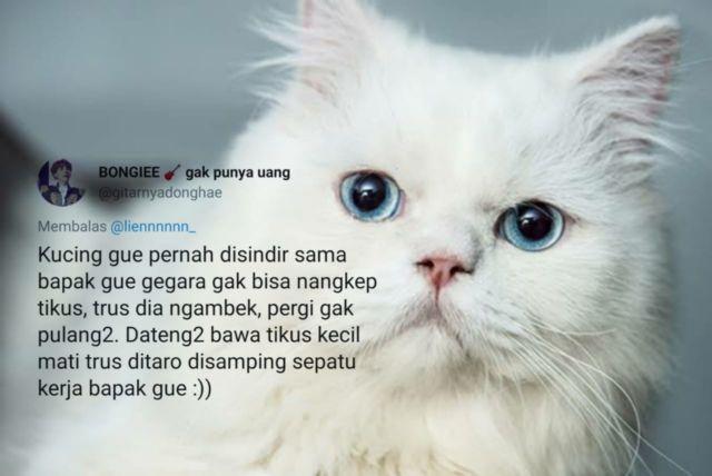 Download 93+  Gambar Kucing Nyebelin Lucu HD