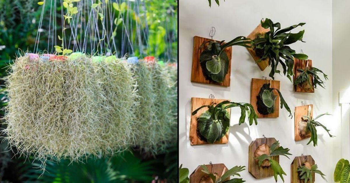 5 Tanaman Hias Yang Bisa Dipajang Di Kafe Kekinian Bikin Segar Dan Instagramable Ruangan