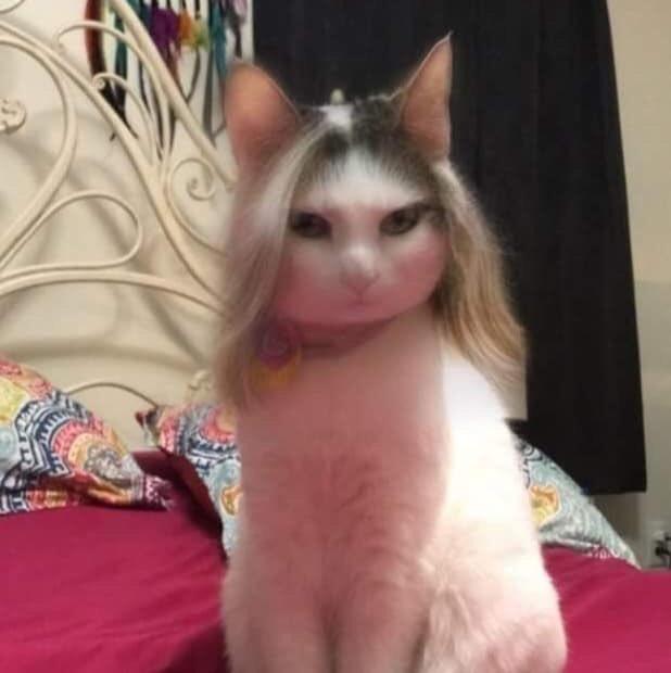 Download 98+  Gambar Kucing Lucu Pake Baju Paling Bagus HD