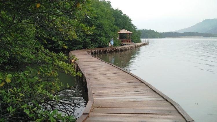 Adem Banget Hutan Mangrove Ini Bisa Jadi Destinasi Wajib Saat Kamu Liburan Ke Lampung