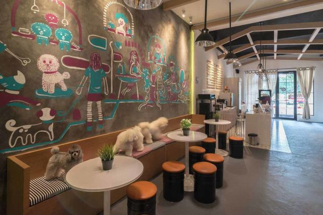 Desain kafe Pet Grooming Studio & Café di Jakarta karya Evonil Architecture
