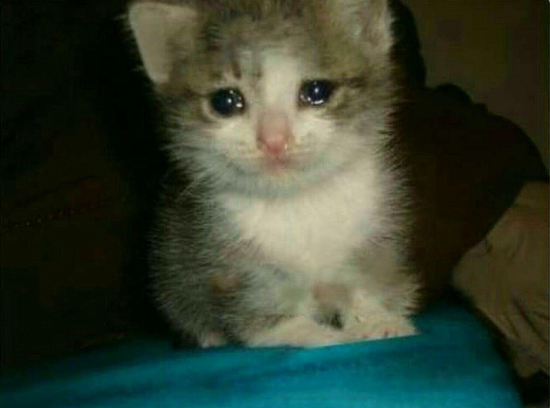 Download 101+  Gambar Kucing Bersedih Imut