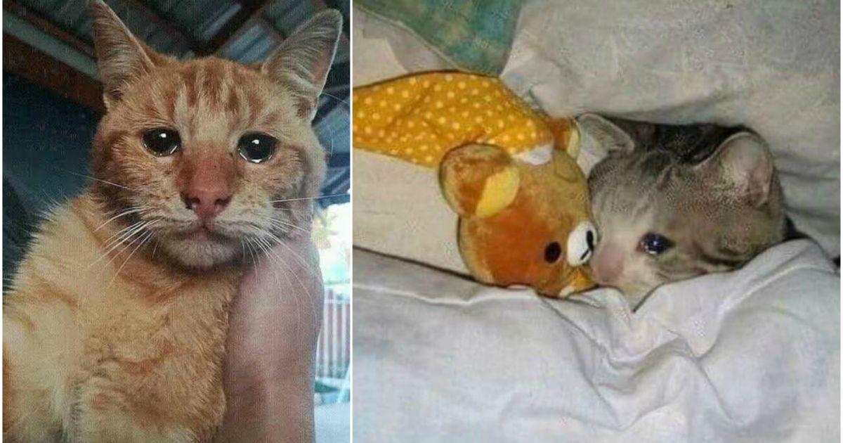 Download 61+  Gambar Kucing Menangis Sedih Dan Galau Paling Keren Gratis