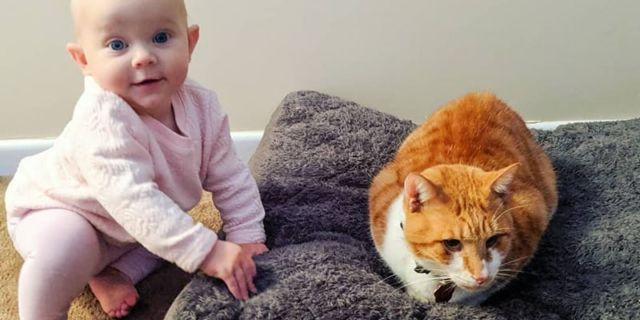 Bayi dan kucing