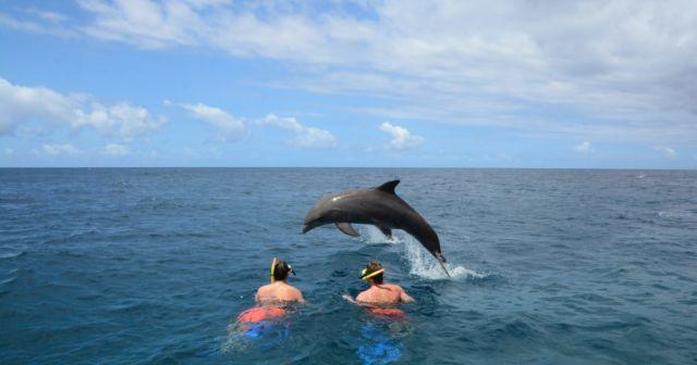 Berenang bersama Lumba-lumba