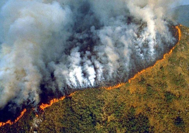 7100 Gambar Hewan Hutan Amazon HD