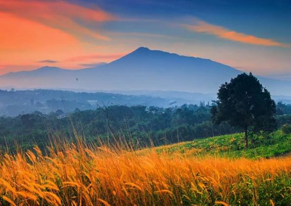 Bukit Wangun Wisata Alam Di Bogor Dengan Pemandangan