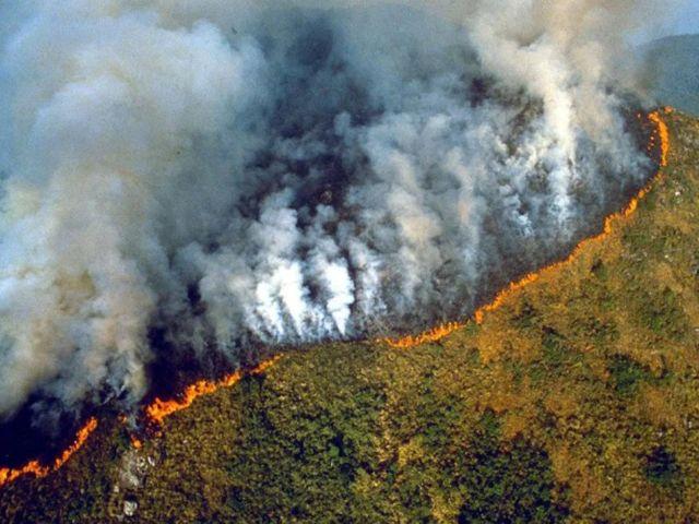 34+ Hewan hewan aneh di hutan amazon terupdate