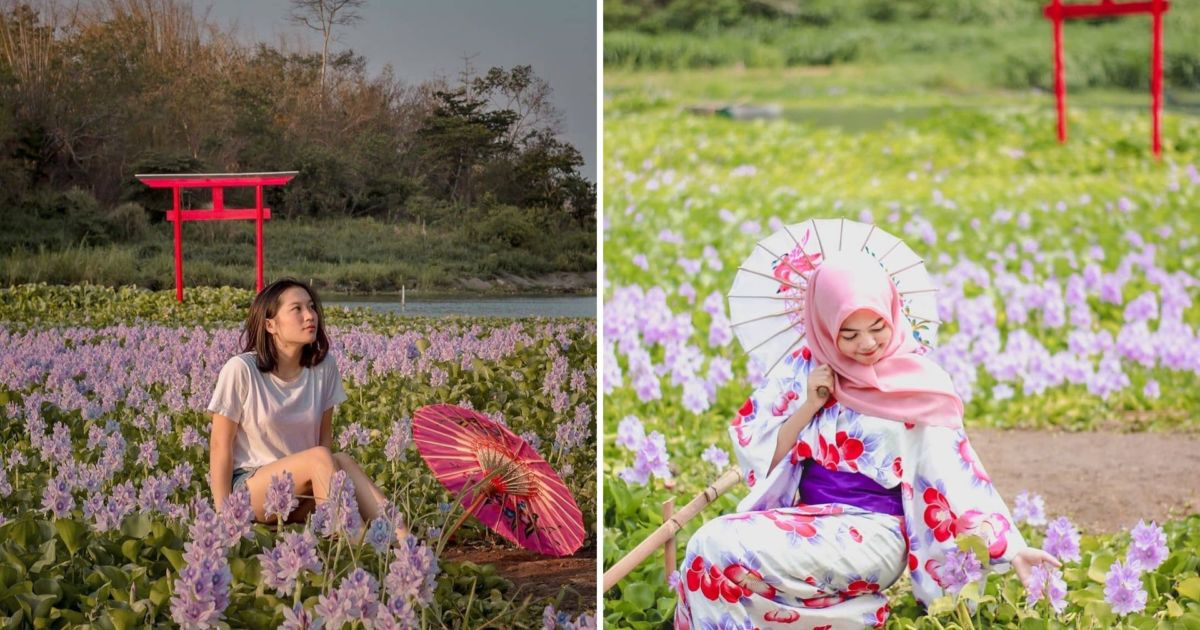 Kalinampu Natural Park Destinasi Wisata Di Bantul Yang Serasa Berada Di Jepang Taman Bunganya Cantik