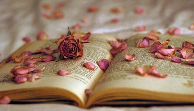 Mawar Berduri dan kuatnya Keyakinan