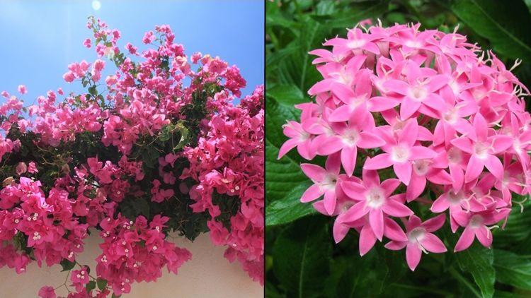 Tak Hanya Tabebuya 9 Tanaman Berbunga Cantik Ini Juga Cocok Ditanam Di Halaman Rumah