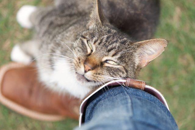 Kalau Ada Kucing yang Menunjukkan 6 Gestur ini, Tandanya Ia Menyukaimu.  Buruan Ajak Main!
