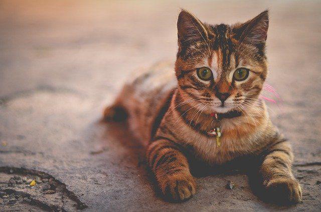 Fakta Tentang Kucing Yang Memiliki Sembilan Nyawa