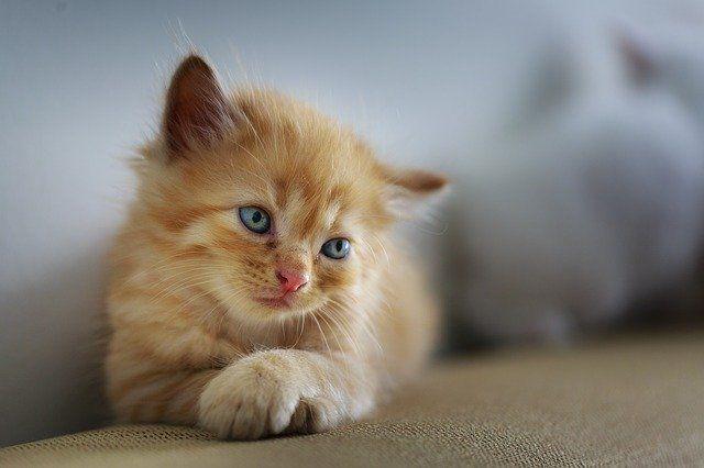 Kucing Tidak Memiliki Bakteri Kotor di Tubuhnya