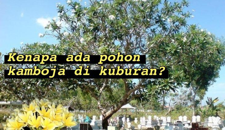 Bercitra Horor, Ternyata Ini Alasan Ilmiah Kenapa Pohon Kamboja Selalu Ada di Kuburan. Masuk Akal!