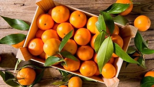 Buah Jeruk mandarin