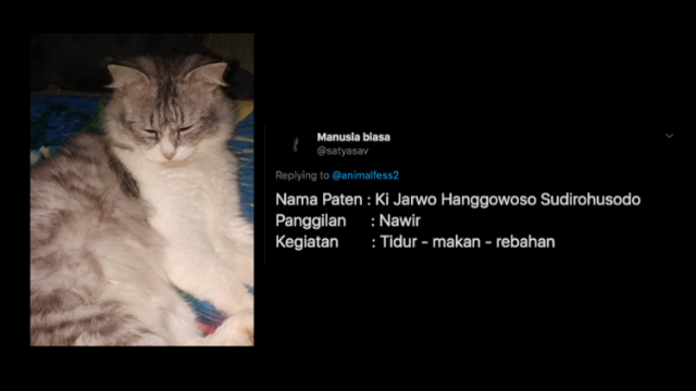 Nggak Cuma Si Belang Dan Katty Inilah Deretan Nama Kucing Yang Paling Nggak Kepikiran Bisa Aja D