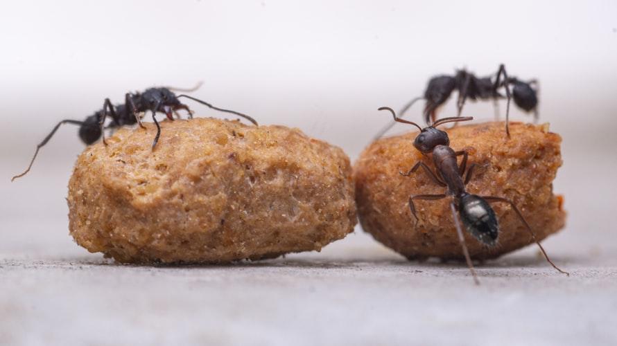 Semut-semut kecil.