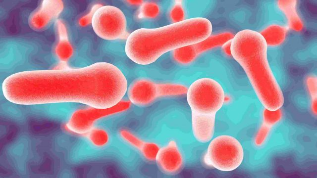 Infectious Diseases by Mayo Clinic News Network