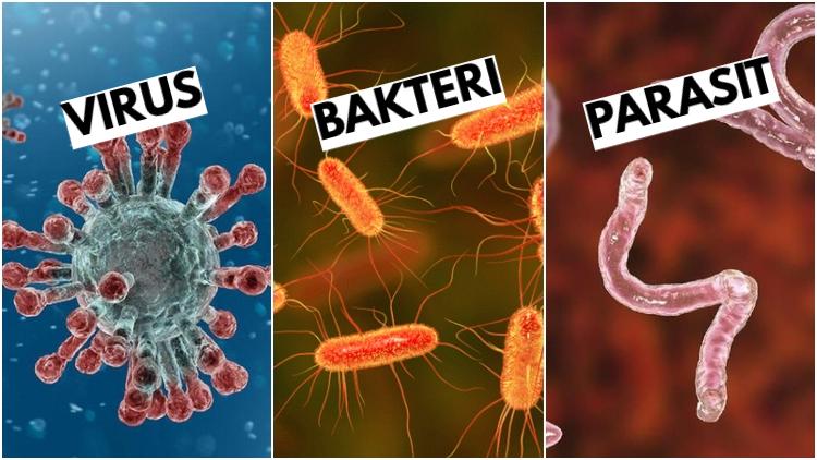 Jelaskan Perbedaan Virus Dan Bakteri