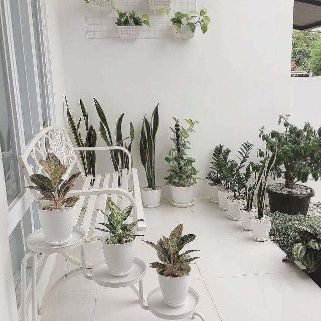 10 Trik Menata Taman Minimalis Di Teras Rumah Yang Sempit Penempatan Bisa Disesuaikan Selera