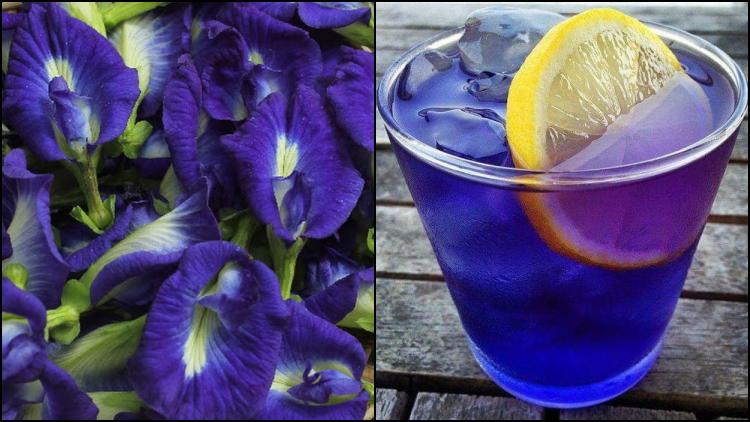 8 Manfaat Bunga Telang Yang Nggak Cuma Cantik Warnanya Saat Diseduh Bagus Untuk Kesehatanmu