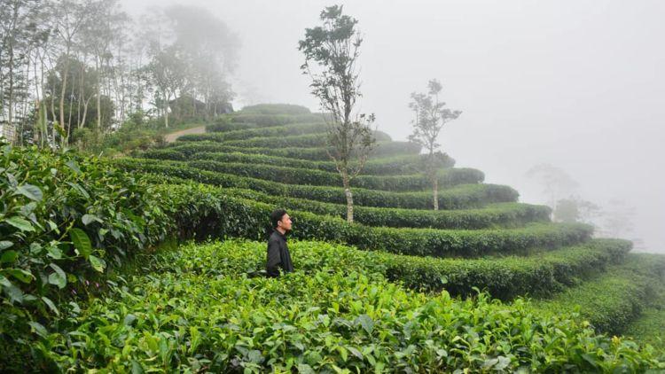 Mengintip Kebun Teh Di Perbatasan Yogyakarta Dan Magelang Fix Mau Segera Ke Sana