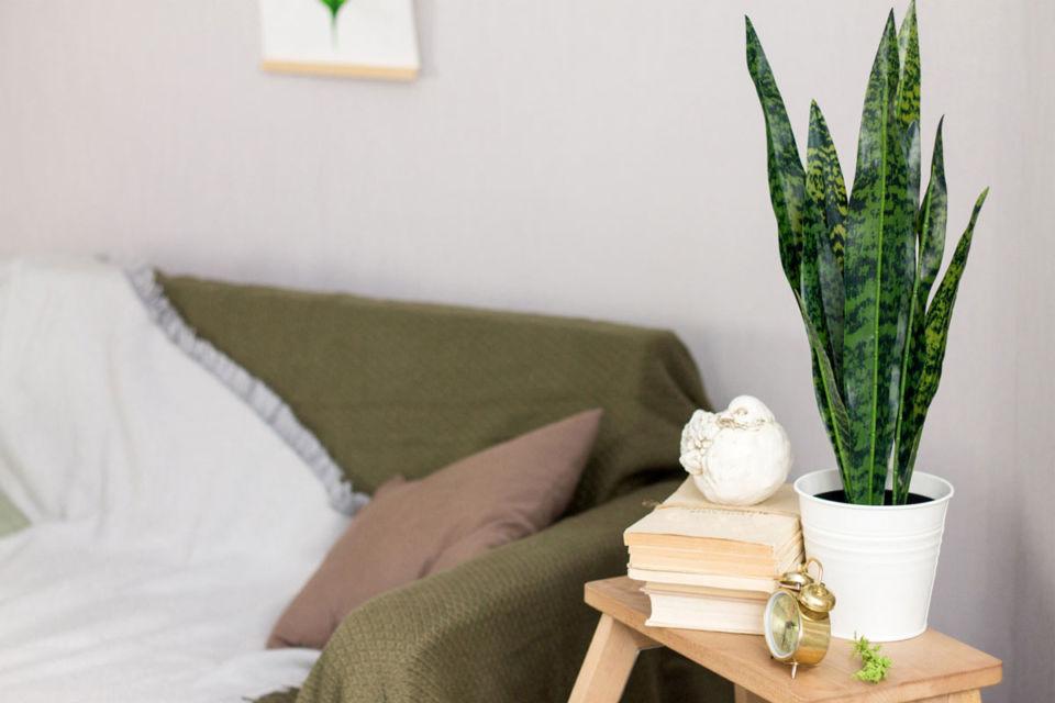 Interior ruang keluarga dengan tanaman hijau di meja, karya Anderson
