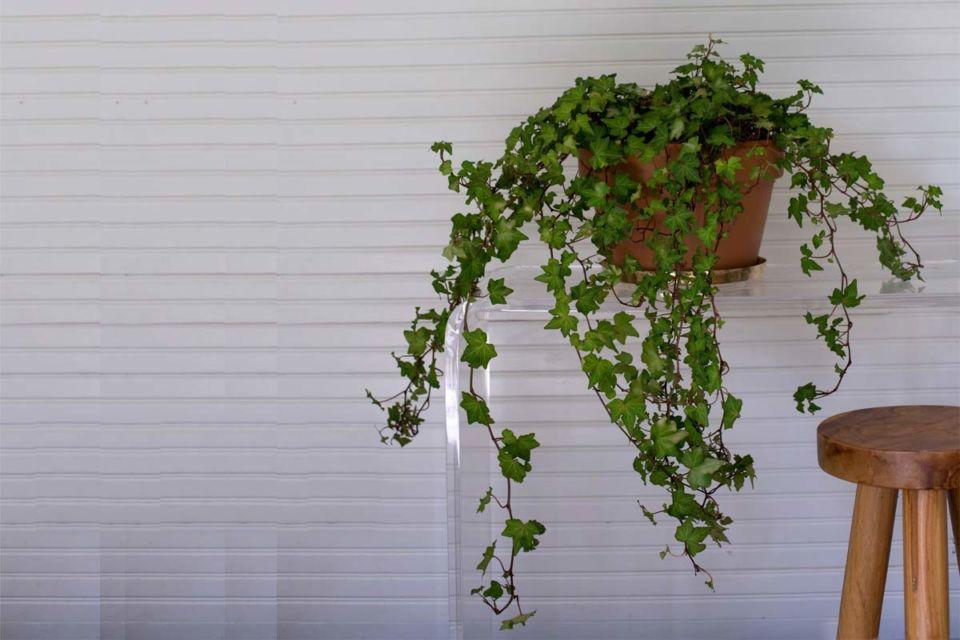 Interior rumah dengan tanaman hijau karya Mimi Giboin