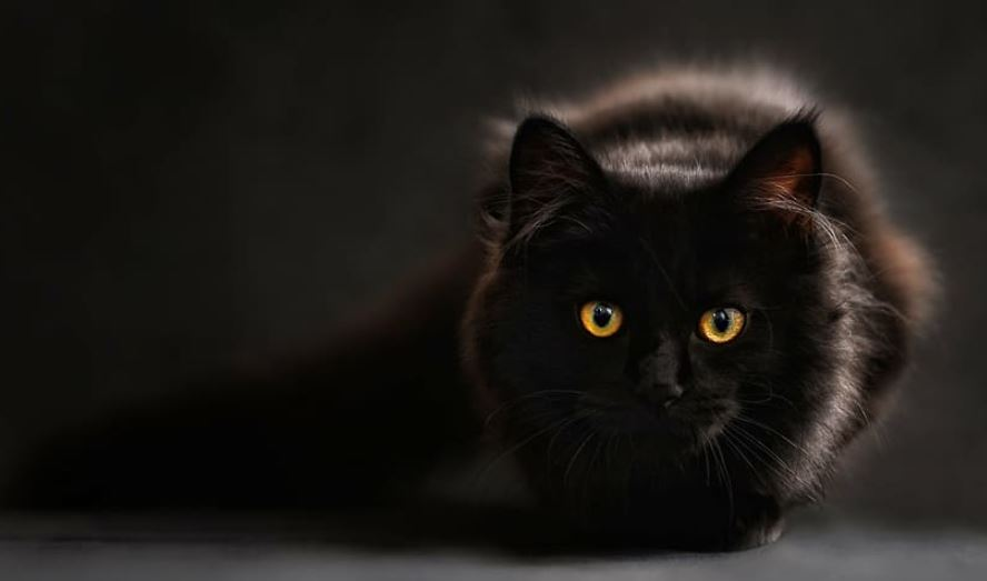 Kucing dalam Kegelapan
