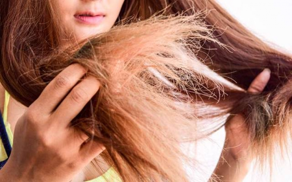 Fakta Tentang Shampo Kuda Yang Katanya Bikin Rambut Cepat Panjang Dan Lebat Pernah Coba