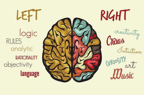 kedua otak bisa jalin kerjasama yang baik