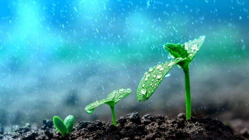 Plant with rain
