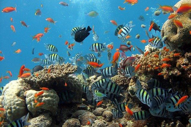 Gambar oleh Visa Vietnam dari Pixabay
