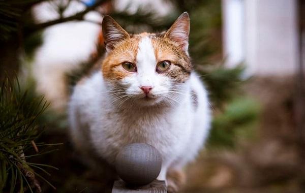 Kucing Diam