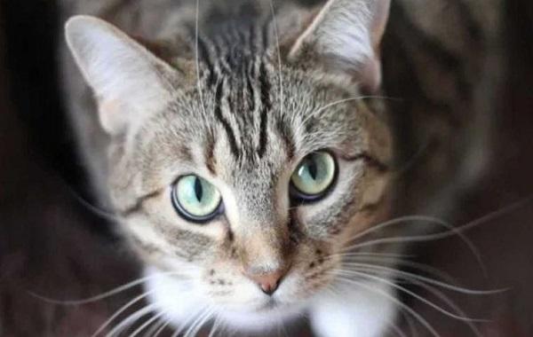 Kucing Mix Dome