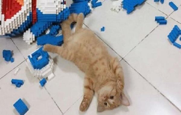 Kucing Bersikap Lucu