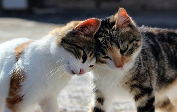 Kucing Perhatian